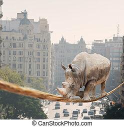 rinoceronte, andar, ligado, corda