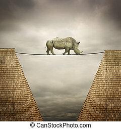 rinoceronte, bilanciato, su, il, linea
