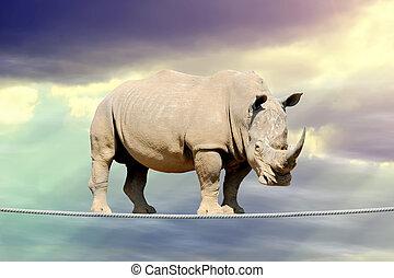 rinoceronte, camminare, su, uno, corda