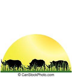 rinoceronte, in, il, erba