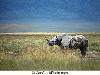 rinoceronte, ligado, planície, vista lateral