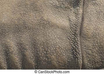 rinoceronte, piel