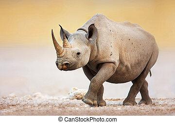rinoceronte, pretas