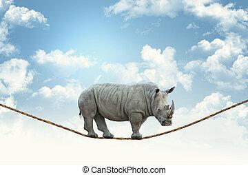 rinoceronte, su, corda