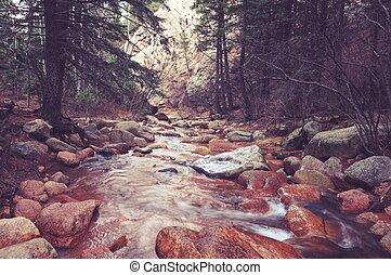rio cênico, colorado, floresta