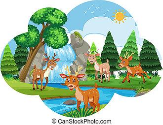 rio, cena, deers