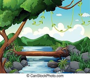 rio, cena, fundo, floresta