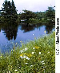 rio, e, flor, vento, paisagem