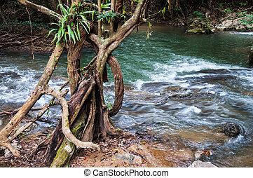 rio, em, a, floresta