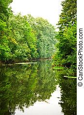 rio, em, floresta