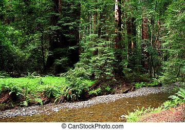 rio, em, madeiras muir