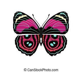 Riodinidae Butterfly Metalmark Vector Illustration