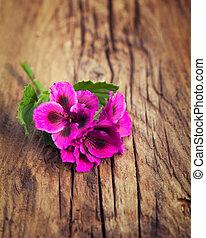Riotous pink geranium on a vintage wood background