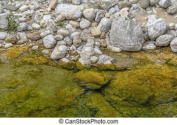 riparian closeup at a river in the Camargue, a natural ...