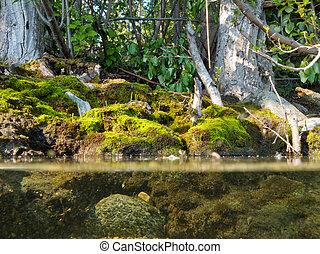 Riparian habitat ecosystem of forest lake shore with tree roots moss and aquatic plants in a over under split underwater view
