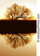 Lone, Bare, Golden Winter Riparian Willow Silhouette Reflected on Still Slough Waters of Wildlife Refuge, Central California