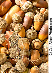 ripe acorns and leaf in basket