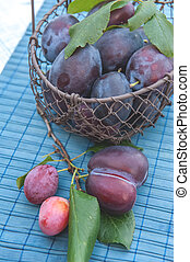 Ripe and juicy blue plums in a wicker basket in a rustic style. Happy Thanksgiving. The horizontal frame.