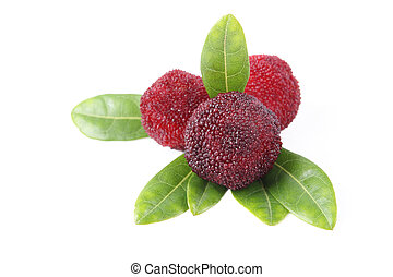 ripe arbutus - waxberry or red bayberry isolated on white.