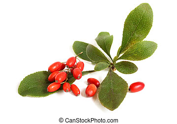 Ripe barberries on branch with green leaves