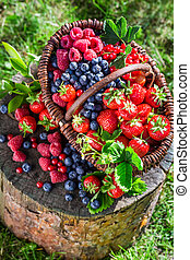 Ripe berries in garden