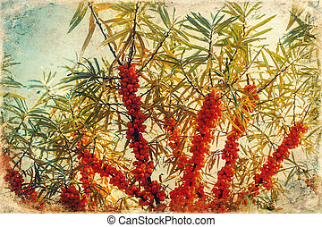 Ripe berries of sea-buckthorn berries, old photo effect. - ...