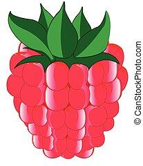 Ripe berry raspberry