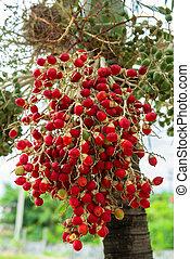 ripe betel nut