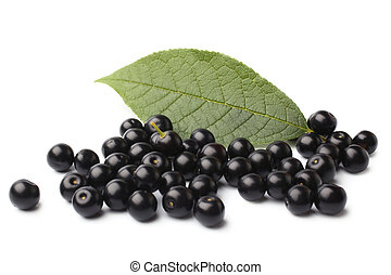 Ripe bird cherry with green leaf
