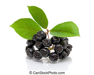 Ripe black chokeberry on a white background - Bunch of ripe ...