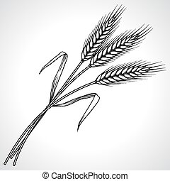 Ripe black wheat ears isolated, vector illustration