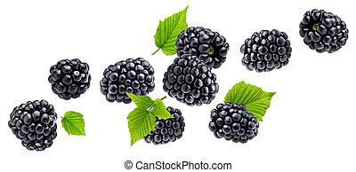 Ripe blackberry isolated on white background