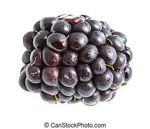 ripe blackberry isolated on white