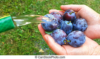ripe blue plums in a hands