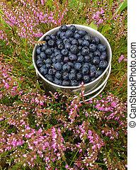Ripe blueberries in a mug