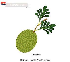 Ripe Breadfruit, A Popular Fruit in Kiribati - Kiribati...