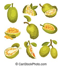 Ripe Bright Green Jackfruit with Seed Coat and Fibrous Core ...