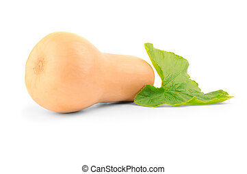ripe butternut pumpkin cucurbita moschata with green leaf isolated on white background