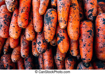 Ripe carrot with lumps of dirt on the counter background