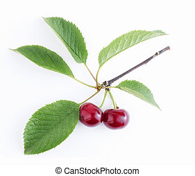 Ripe cherries on a branch with leaves isolated on a white background. Copy space