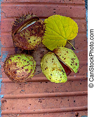 Ripe chestnuts in autumn, outdoor shoot, top view