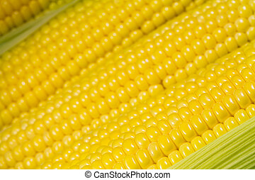 Ripe corn close-up