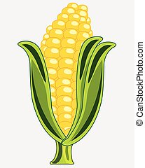 Ripe cob of the corn on white background is insulated