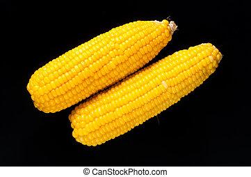 Ripe corn on a black background