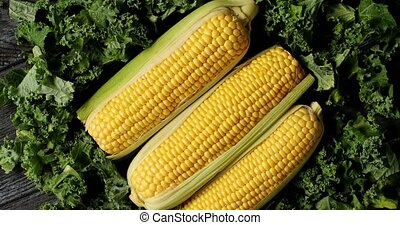 Ripe corncobs on green salad leaves - Top view of composed...