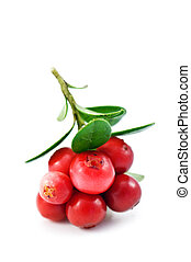 ripe cowberry isolated on white