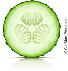 ripe cucumber cut segment vector illustration isolated on...