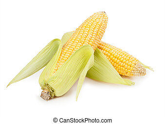 Ripe ears of corn on a white background