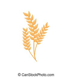 Ripe ears of corn. Vector illustration on white background.