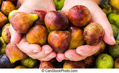 ripe figs in human hands